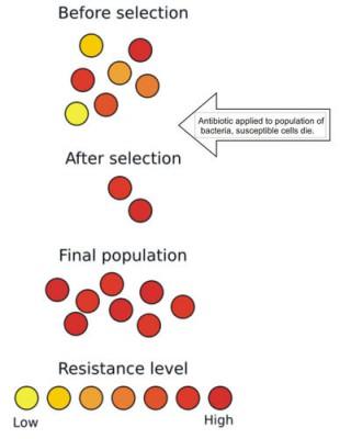 Evolusi Resistensi antibiotik pada Bakteri