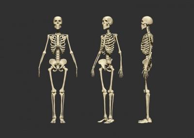 Fungsi Tulang