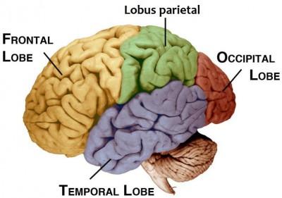 Lobus oksipital