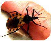 Vektor Penyakit Chagas