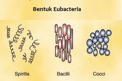 bentuk Eubacteria