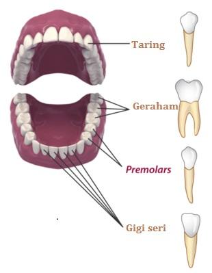 gigi mamalia
