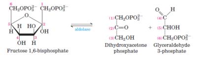 glikolisis langkah 4
