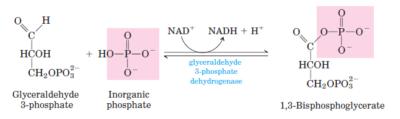 glikolisis langkah 6