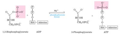 glikolisis langkah 7