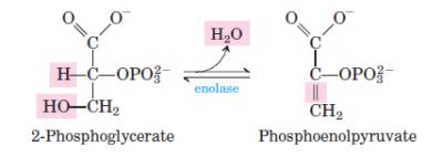 glikolisis langkah 9