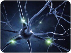 sel saraf manusia