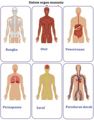 Perbedaan antara jaringan dan organ 1