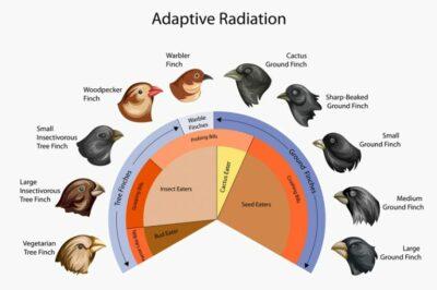 Radiasi adaptif pada Paruh burung