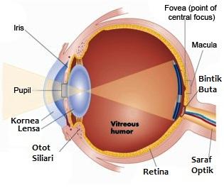 Penjelasan fungsi iris pada mata manusia