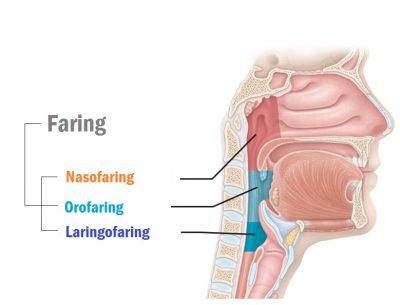 Faring