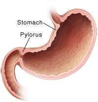Anatomi Pilorus