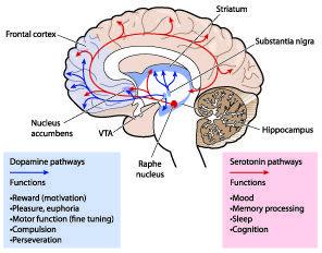 Fungsi Dopamin dalam Memori