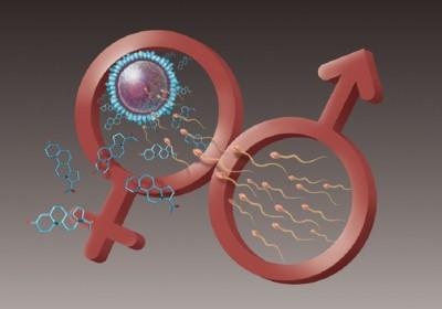 Hormon wanita yang diproduksi ovarium