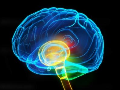 Pengertian Otak tengah