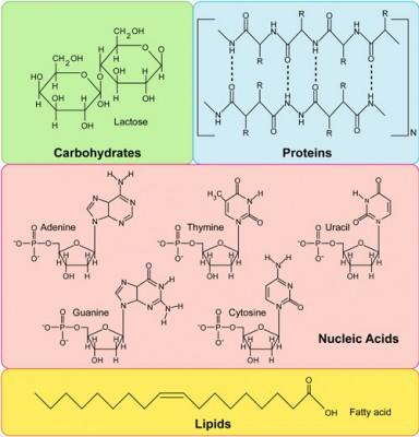 Perbedaan Antara Lipid dan Karbohidrat