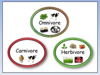 Perbedaan Karnivora dan Herbivora