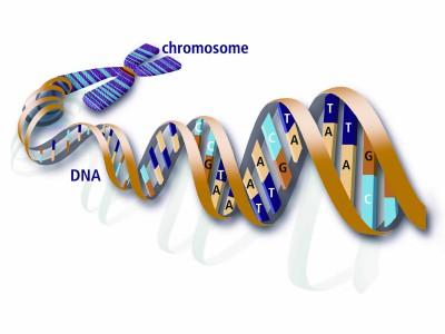 Perbedaan antara kromosom dan DNA