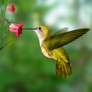 Perbedaan antara serbuk sari dan nektar