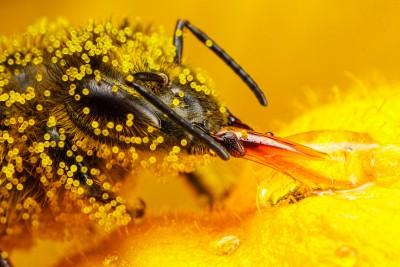 Pengertian Serbuk sari 1