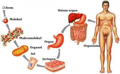 Perbedaan antara jaringan dan organ