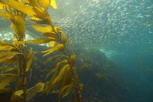 Bioma Akuatik: Air laut dan Tawar