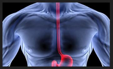 Fungsi esofagus 1