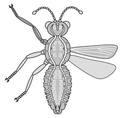 sistem pernapasan serangga