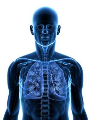 Struktur organ sistem pernapasan manusia dan fungsinya