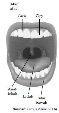 Gambar 6.6 Di rongga mulut terdapat lidah