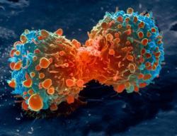 pembelahan sel