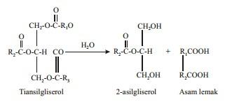 reaksi hidrolisis lipid