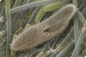 Habitat Protozoa