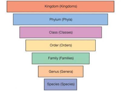 Tujuan dan Manfaat Klasifikasi makhluk hidup