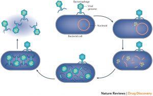 5 Tahap proses penggandaan tubuh virus (Bakteriofag)