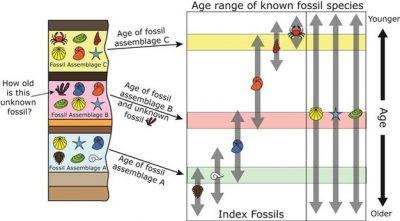 Bagaimana Cara Menentukan Umur Fosil?