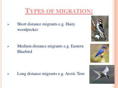 Jenis Migrasi