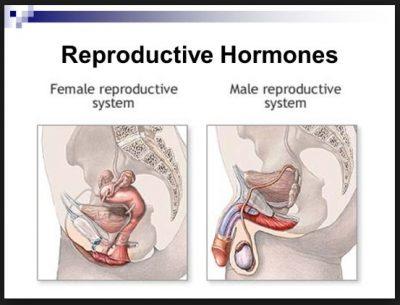 Fungsi sistem reproduksi manusia