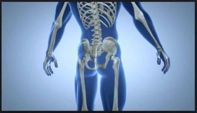Tulang Anggota Gerak Atas dan Bawah