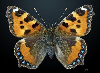 Pengertian dan contoh hewan Simetri bilateral