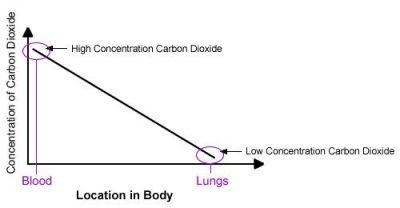 Konsentrasi Karbon Dioksida dalam darah