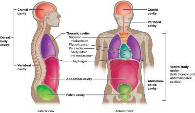 Rongga tubuh manusia