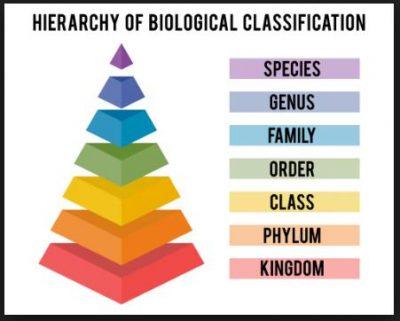Tingkatan Takson dan Klasifikasi