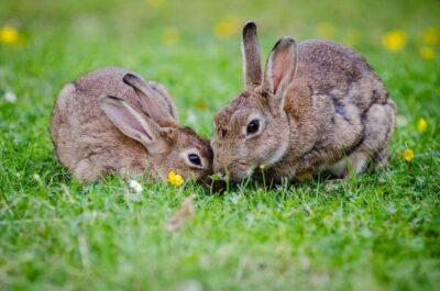 ciri-ciri hewan herbivora