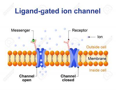 contoh ligan