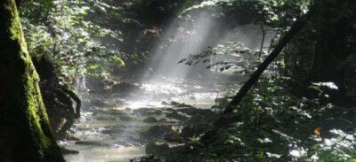 habitat Hewan Herbivora