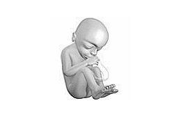 Hamil 20 minggu