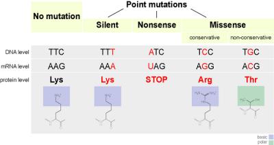 Pengertian Mutasi titik, jenis dan contoh Mutasi titik