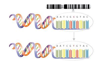 Mutasi substitusi - pengertian, penyebab, jenis dan contoh