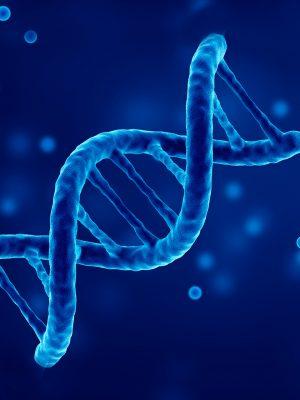 Transkripsi dalam sintesis protein